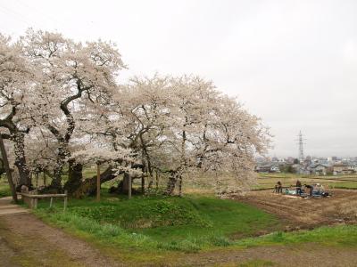 NHKスタッフ、大河ドラマ「八重の桜」用の映像撮影中@石部桜_2012/04/28