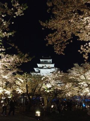 鶴ヶ城天守閣と夜桜_2012/04/29
