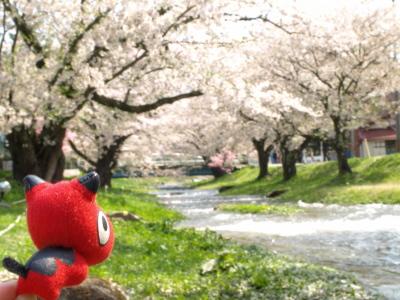 あかべぇと観音寺川の桜_2012/05/06朝散歩