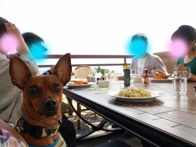 磐梯スノーDogs(バルコニーで食事)@猪苗代町