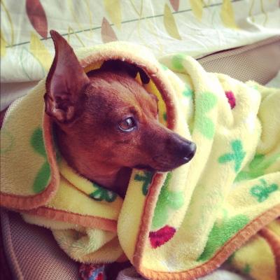 毛布でぬくぬくしたいアクア