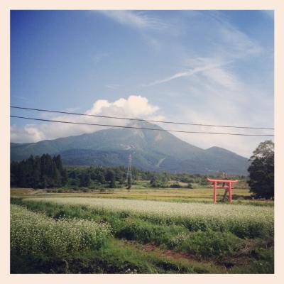 佐良志奈神社の鳥居と磐梯山と蕎麦の花