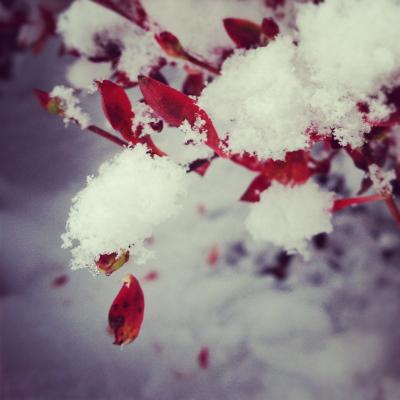 2012年12月9日(日)積雪@会津若松市