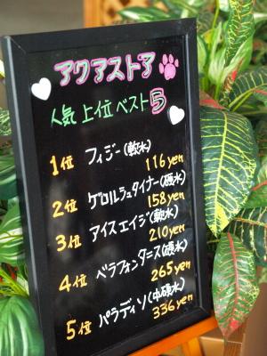 ドッグラン&カフェ 磐梯スノーDogs@猪苗代