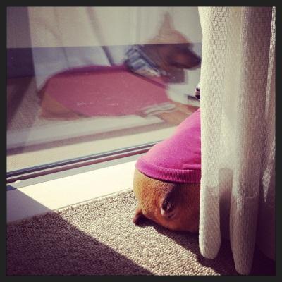 アクア、窓際ひなたぼっこ