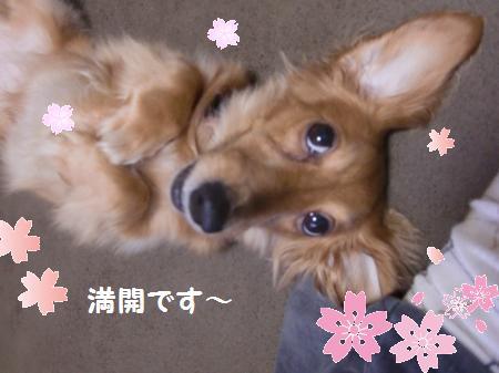 同期の桜は咲き乱れてんだよ。