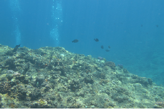 二日目マエダ岬海中3