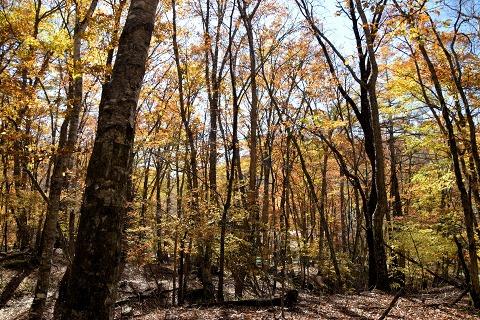 逆光の広葉樹林