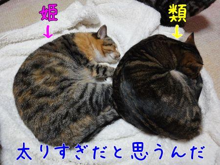 4太りすぎ