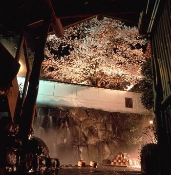 露天風呂夜桜350×357