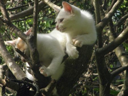 005_convert_20141002111056猫の木4