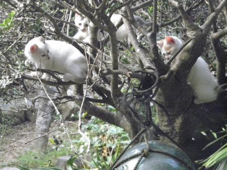 001_convert_20141002110729猫の木1