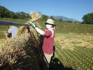 2014.10.9 稲刈り2