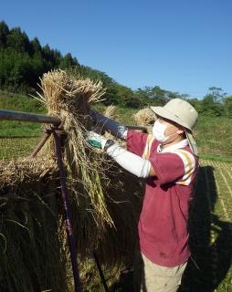 2014.10.9 稲刈り 4