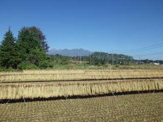 2014.10.9 稲刈り 3