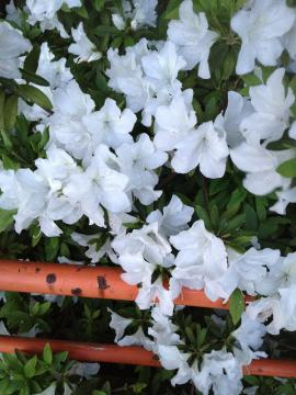 2012-0505 お花