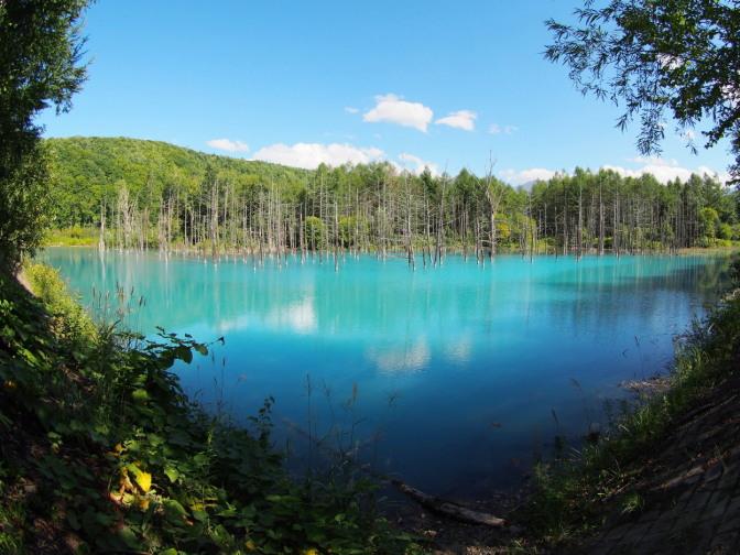美瑛町白金の青い池