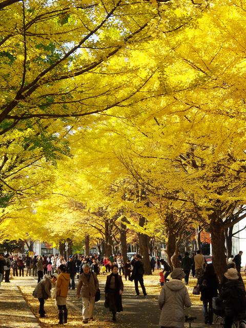 hokkaido_university2_04t.jpg