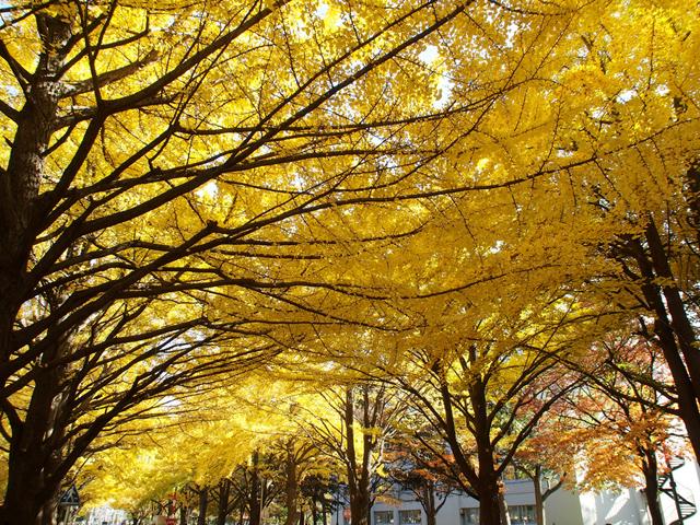 hokkaido_university2_12t.jpg