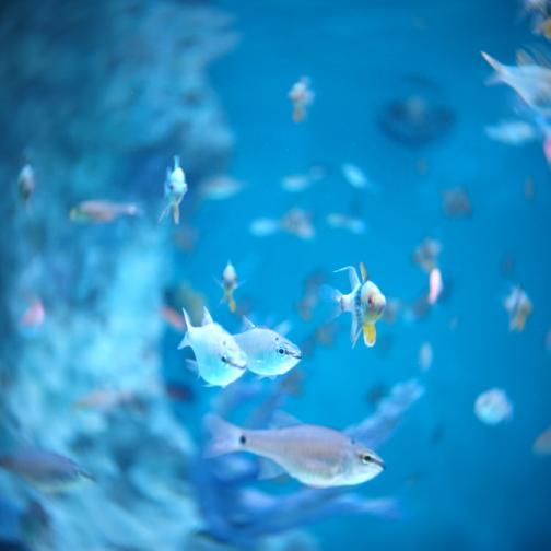 おたる水族館/熱帯魚
