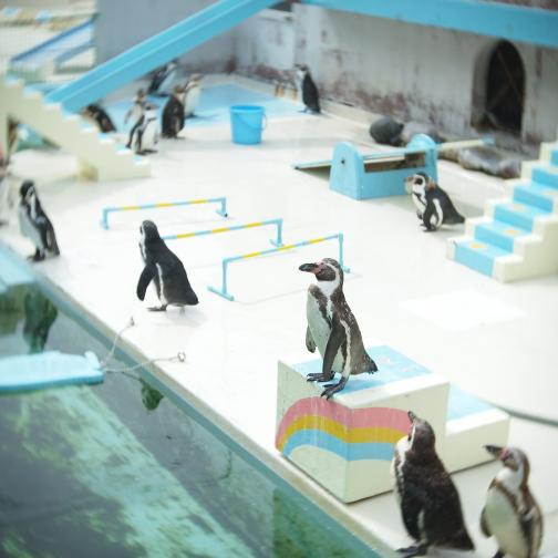 おたる水族館/ペンギン