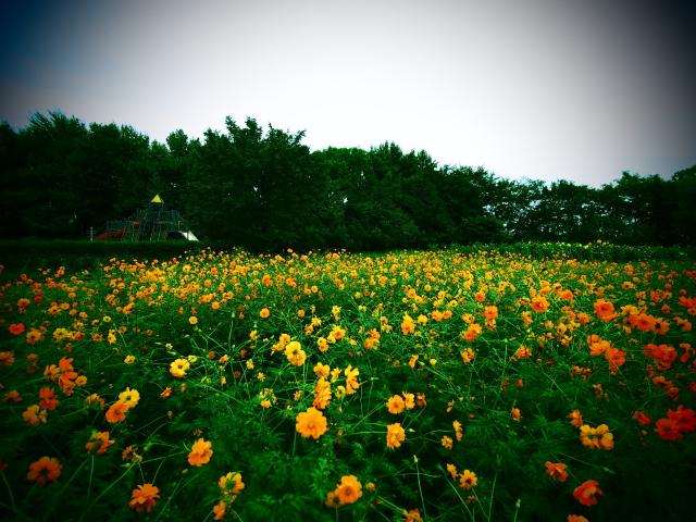 yurigaharapark2_11t.jpg