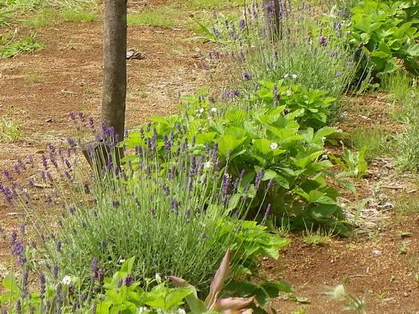 花の農園 008