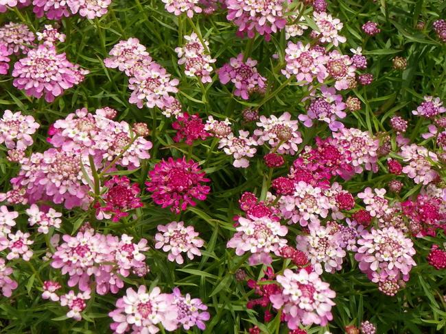花の農園 004