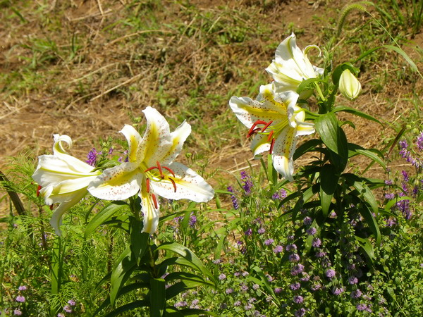 花の農園 123