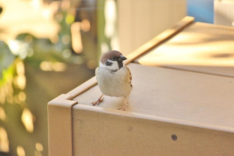 141217sparrow