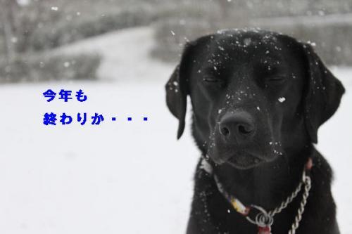 もの思いにふける犬