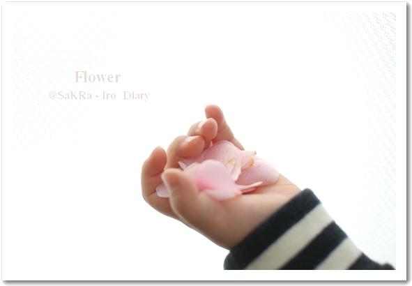 小さな手に花びら