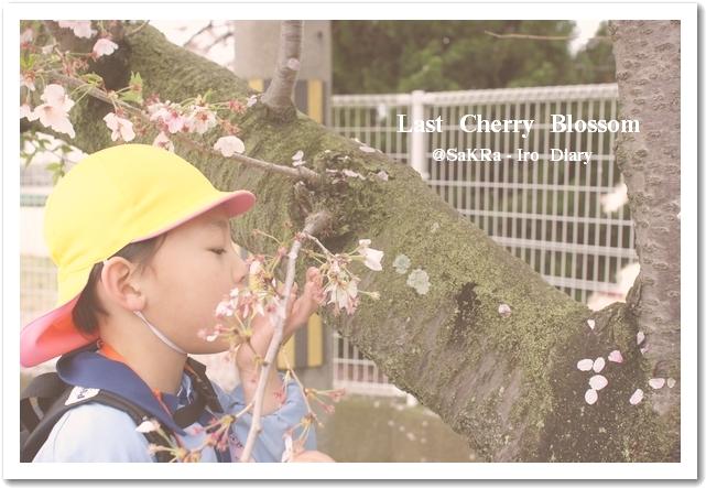 桜をフゥー