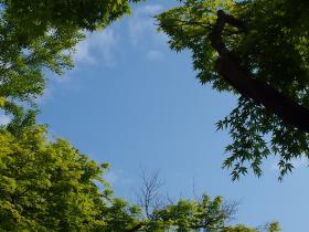 永山公園グリーン1