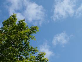 永山公園グリーン2