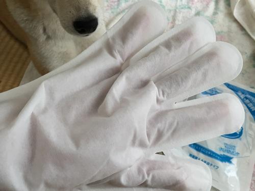 ウエット手袋3