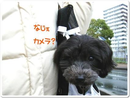 sakuてま 106791