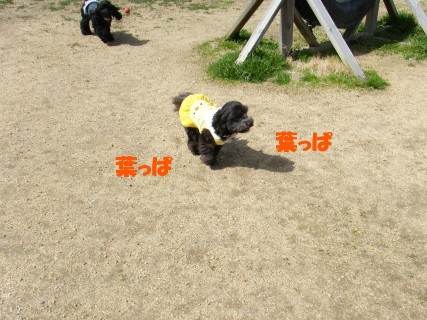 sakuてま 106880