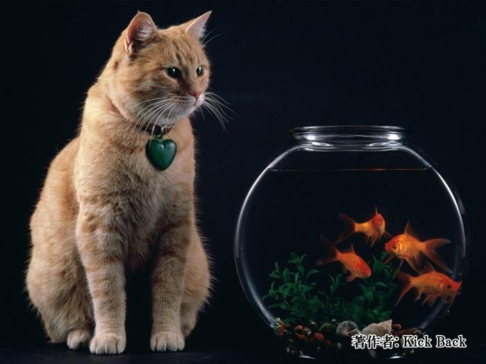 猫と金魚鉢