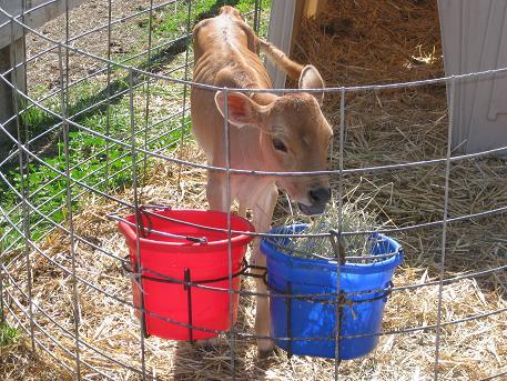 milk farm1