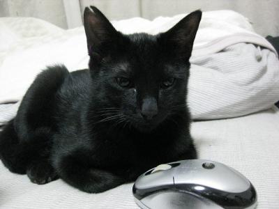 預かり猫2号
