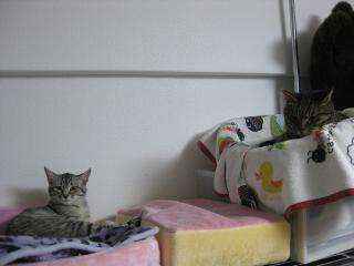 ギンガとうちの猫1