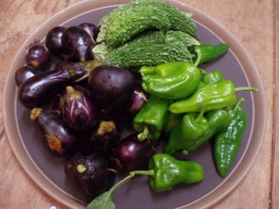 20110921野菜1