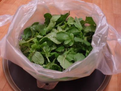 20110921野菜2