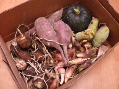 20110928秋野菜