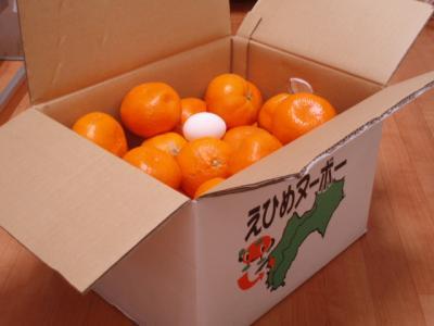 20111231えひめヌーボー箱10kg