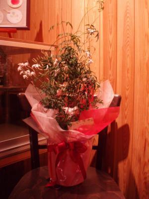 20120305お花