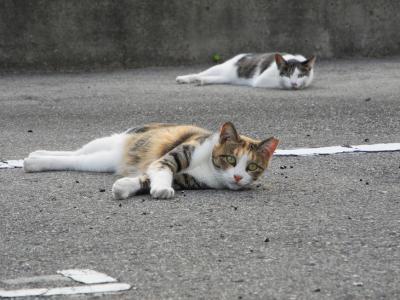20120909猫通り1