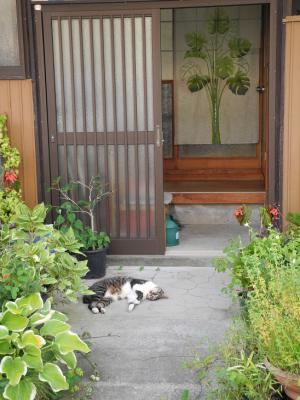 201200909猫通り3