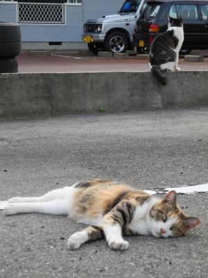 20120909猫通り4